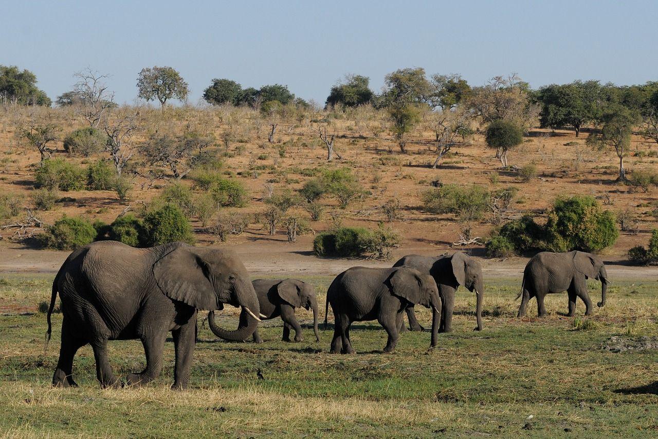 botswana-1653014_1280
